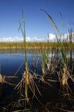 evergladesflorida marshes Arkivbilder