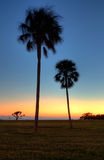 evergladesflorida solnedgång Royaltyfri Bild