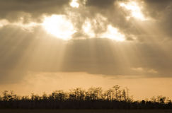 Evergladeshimmel Royaltyfri Fotografi