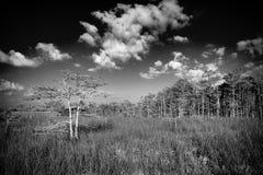 Evergladeslandschap - B/W Stock Afbeelding