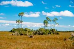 Evergladeslandskap Royaltyfria Bilder