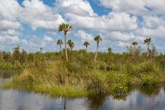 Evergladesna Royaltyfri Foto