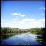 Evergladesnationalpark Fotografering för Bildbyråer