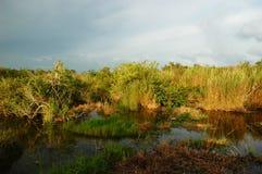 evergladesnationalpark Royaltyfri Fotografi