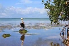 Evergladesnationalpark Arkivfoton