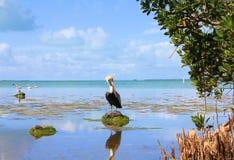 Evergladesträsk Arkivbilder