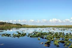 evergladesvåtmark Arkivfoto