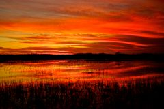 Evergladeszonsondergang Stock Foto's