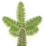 evergreen ветви изолировал Стоковая Фотография RF