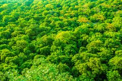 evergreen fotografie stock