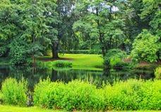 evergreen fotos de stock
