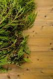 evergreen fotografia stock