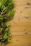 evergreen fotografie stock libere da diritti