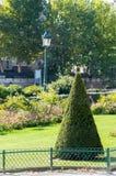 Evergreen beskar för askträd för kotte europeiska buskar Arkivbild