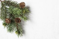 Evergreen Bough with Pine Cones. On textured white wood background Stock Photography