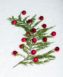 Evergreen bough with red ornaments Stock Image