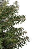 Evergreen Boughs stock photos