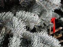 Evergreen boughs stock photos
