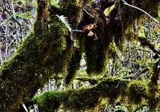 Evergreen boxwood Stock Image