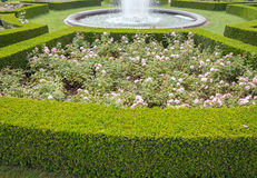 Free Evergreen Boxwood Hedge Adorn A Rose Garden Royalty Free Stock Image - 74459386