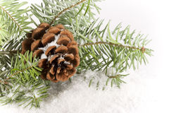 Evergreen Branch with Cone. An evergreen branch with pinecone resting in snow royalty free stock images
