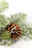 Evergreen Branch with Cone-vertical. An evergreen branch with pinecone resting in snow Royalty Free Stock Photos