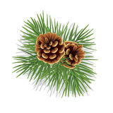 Evergreen branch with cones Royalty Free Stock Photo