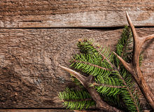 Evergreen Branch and Deer Antler on Wooden Surface Royalty Free Stock Photo