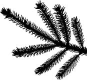 Evergreen Branch Silhouette. Silhouette of an evergreen branch in black and white; available in vector Royalty Free Stock Photography