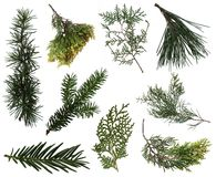 Evergreen branches collection
