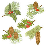 Evergreen branches with cones and berries. Illustration of evergreen branches with cones and berries, design elements isolated on white background Royalty Free Stock Images
