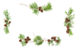 Evergreen branches cones Christmas background Floral frame Stock Photo