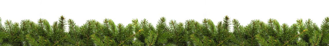 Evergreen branches on white Royalty Free Stock Photography