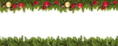 Evergreen branches on white Stock Photos