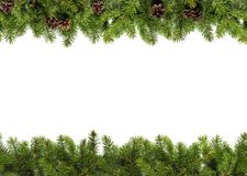 Evergreen branches on white Stock Photo