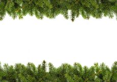 Evergreen branches on white Royalty Free Stock Photos