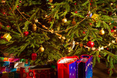 Evergreen christmas tree with gifts Royalty Free Stock Image