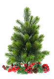 Evergreen christmas tree with red decoraton Stock Photos