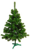 Evergreen christmas tree undecorated Royalty Free Stock Photography