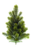 Evergreen christmas tree undecorated on white Stock Image