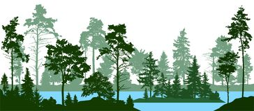 Evergreen coniferous forest with pines, fir trees, christmas tree, cedar, Scotch fir. Forest silhouette trees. Lake river vector. Every tree isolated, separate royalty free illustration