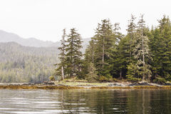 Evergreen Covered Point in Calm Water Royalty Free Stock Photo