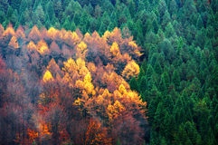 Evergreen and deciduous tree forest Royalty Free Stock Photos