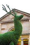 Evergreen deer Stock Photos