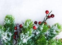 Evergreen di natale sopra l'esposizione immagini stock libere da diritti