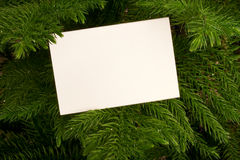 evergreen för blankt kort Arkivfoton