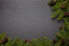 Evergreen förgrena sig på vit Fotografering för Bildbyråer