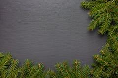 Evergreen förgrena sig på vit Royaltyfri Fotografi