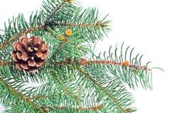 Evergreen fir and cone christmas backgound Stock Photos