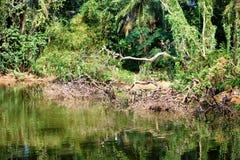 Evergreen flora around lake, trees and plants diversity in Trivandrum, Thiruvananthapuram Zoo Kerala India. Evergreen flora around lake, trees and plants Royalty Free Stock Photography